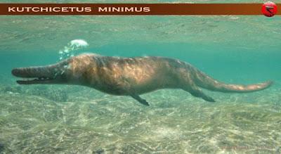 cetacea extinta Kutchicetus