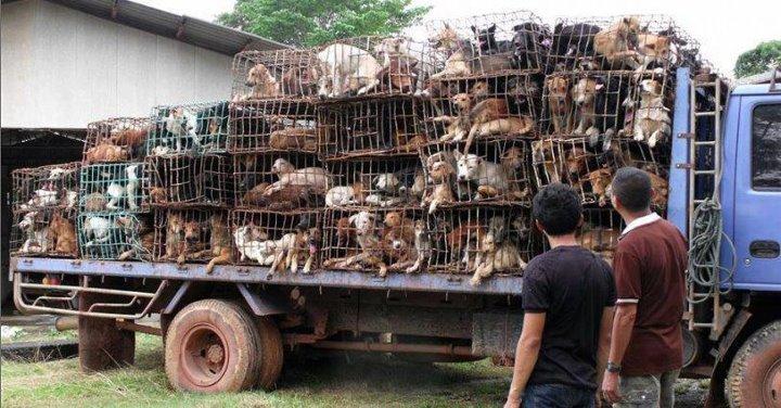VENTA DE ANIMALES, POR FAVOR HAZTE ACTIVISTA EN CONTRA DE ESTO