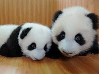 Curhat Panda Part II :)