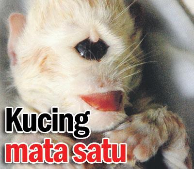 Misteri Pelik Dan Anak Kucing Bermata Satu