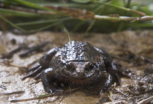 Extinct Frog Found in Israel