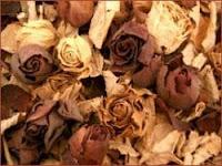 como secar un ramo de rosas