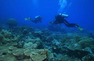 Pulau Pasu Salah Satu Spot Menyelam Favorit di Kepulauan Anambas