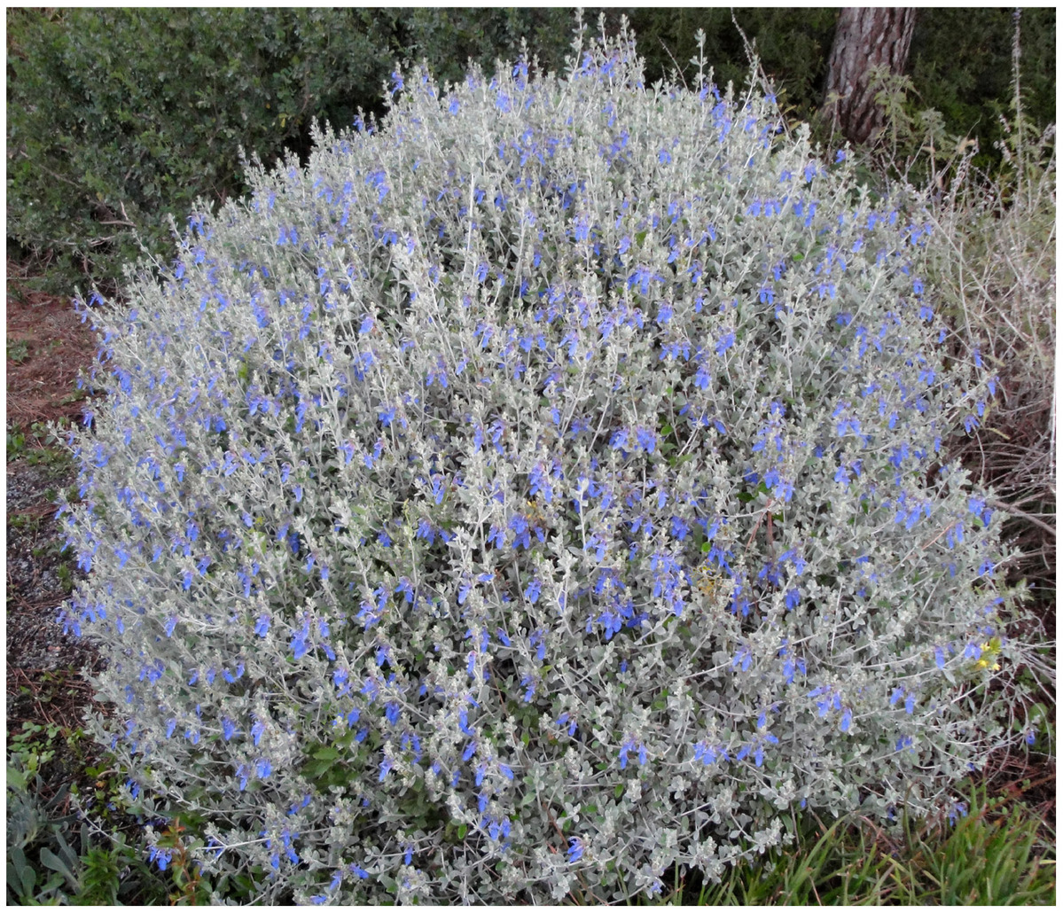 um jardim para cuidar  arbustos floridos para a primavera