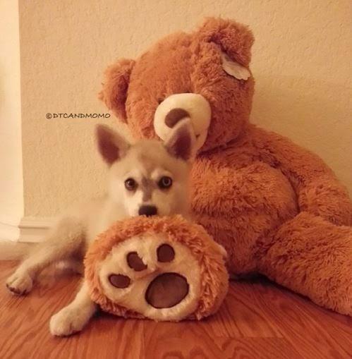 Momo and teddy