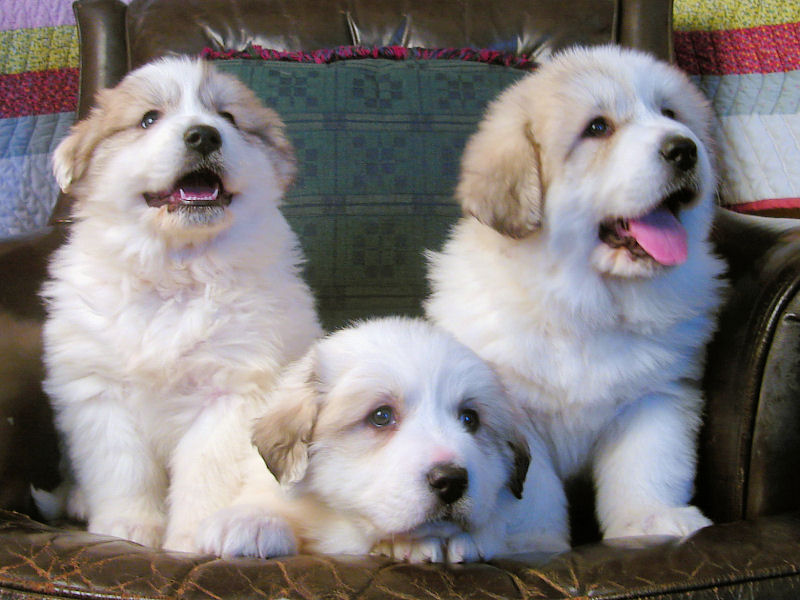 Puppy Image Gallery