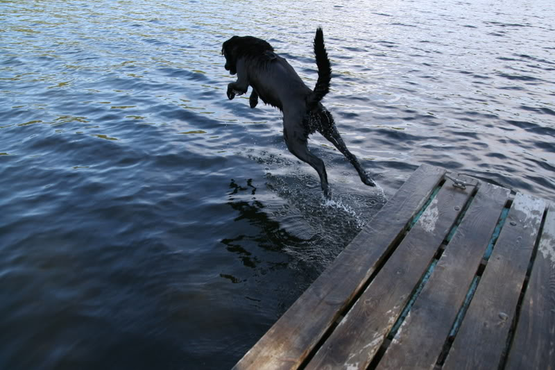 Diving doggy...