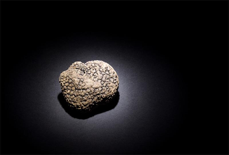 Black truffle focus