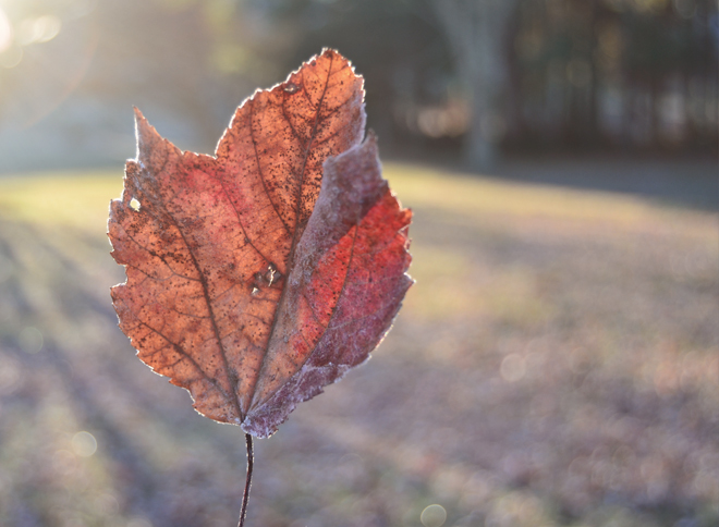 The Flying Clubhouse: Frosty Leaf