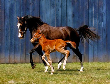 http://www.kentuckytourism.com/media/enewsletter/april2012/horsefacts.aspx
