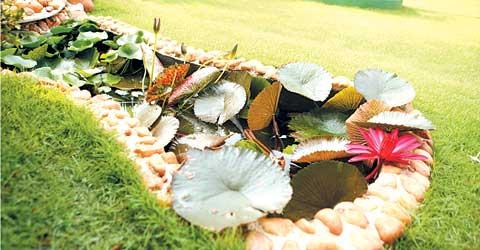 Manorama Online | Veedu | Gardening |