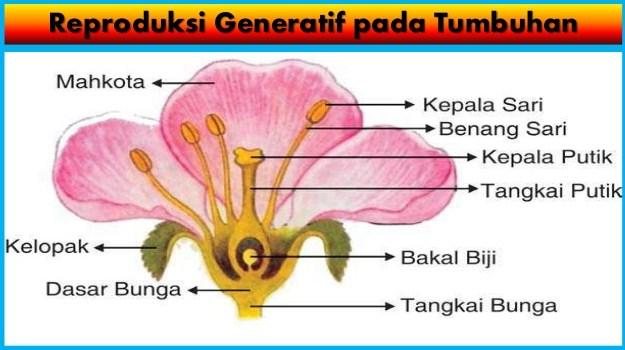 Pengertian Proses Reproduksi Generatif Pada Tumbuhan