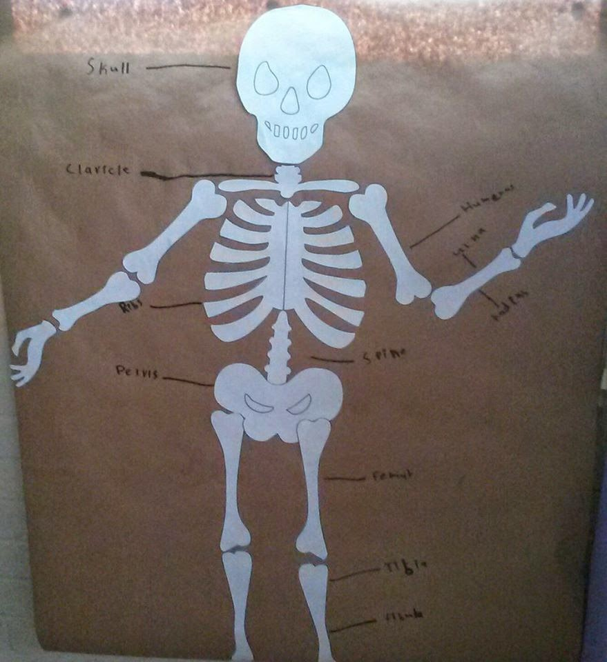 building skeletons essay