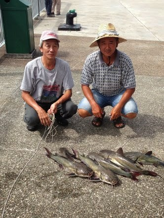 Big Catfish [Hexanematichthys], Seng Heurr 鲶鱼 [chinese] or Bulukang [malay] Caught by Ah Kui and Ah Siong on 28th May 2014 At Woodland Jetty.