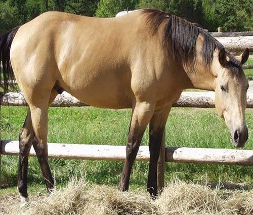 Dun Horses picture 2