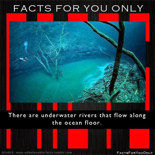 Facts for you only there are underwater rivers that flow for 10 facts about the ocean floor