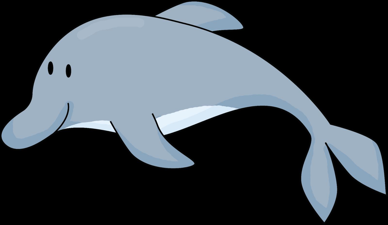 let u0027s get fancy in first flippy dolphin