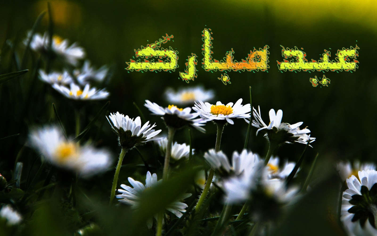 Eid ul adha zuha mubarak free e card wallpapers widescreen hd eid ul zuha adha mubarak card flower wallpapers urdu text izmirmasajfo