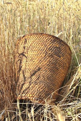 Curso de cestería en Caballar