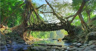 اغرب جسر في العالم , لم يستخدم فيه اي جماد وهو كائن حيّ
