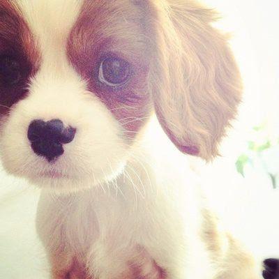 Hình cún con dễ thương đáng yêu