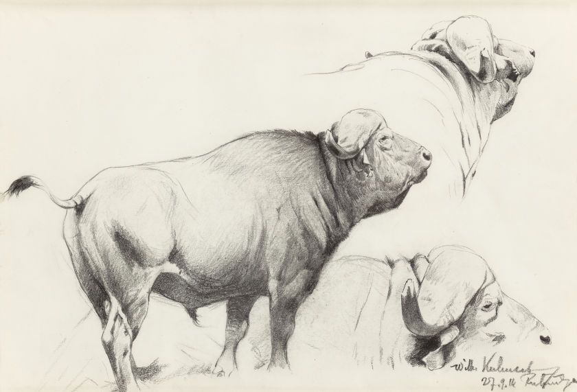 Wilhelm kuhnert cape buffalo heritage auctions may 2 2015