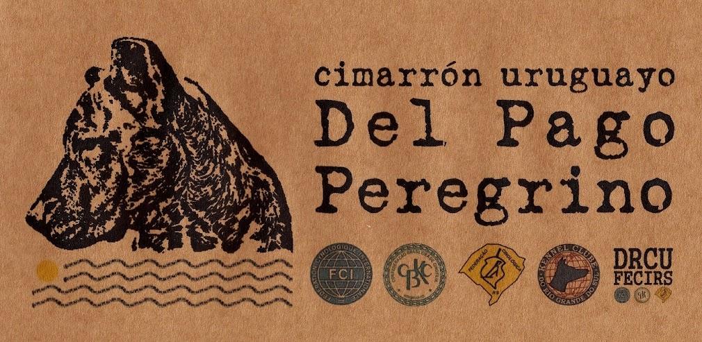 Cimarrón Uruguayo Del Pago Peregrino