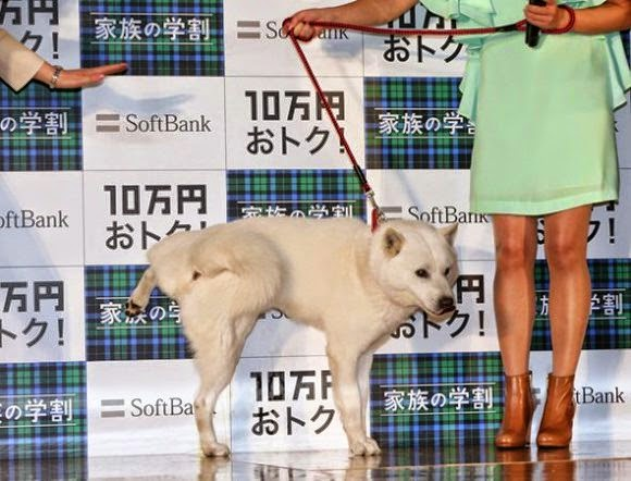Softbank's dog mascot urinating at a press conference
