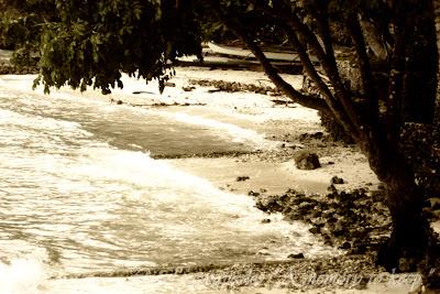 Sea shore,Talicud Samal Island