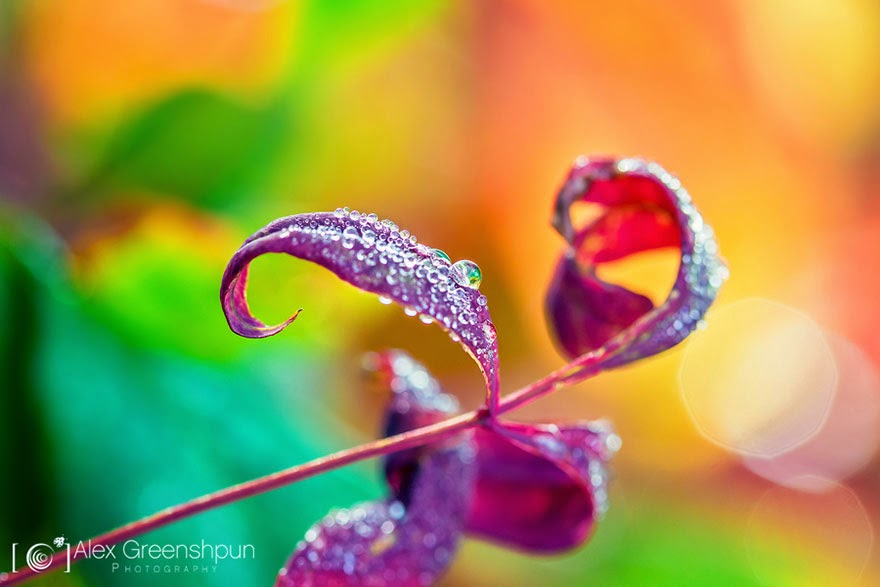 Creative macro photography