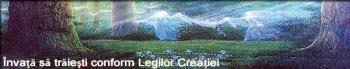 Află despre Legile Creaţiei
