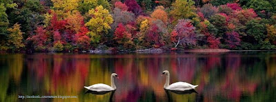 Couverture facebook - Paysage cygnes d'automne
