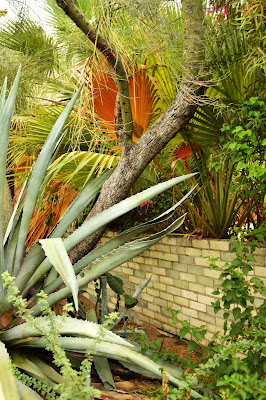botany, cacti, cactus, desert life, plants, agave
