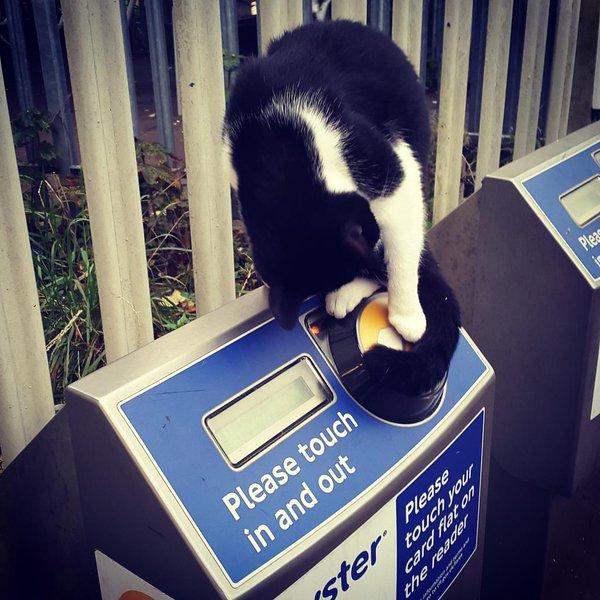 gipsy hill station cat