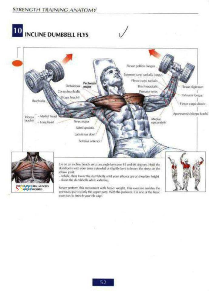 Health and Fitness Programs: Chest Workout Routine for Mass