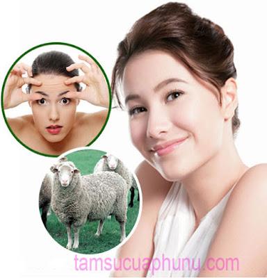 """Bí quyết làm đẹp """"thần kỳ"""" từ Nhau Thai Cừu của Úc"""
