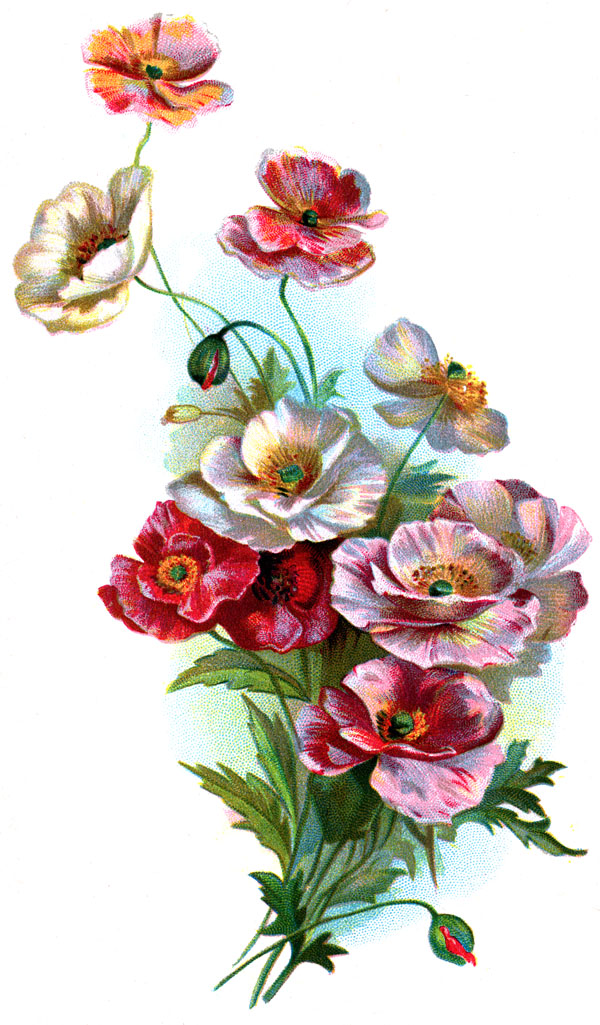 Drawings of FlowersVictorian Flower Drawings