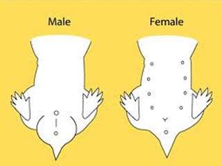 how to clean your genital area male