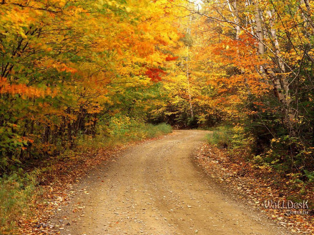 http://1.bp.blogspot.com/-yYgBAeX9nDA/Tp22OpHfE0I/AAAAAAAAAO0/62JNpNQ1EPE/s1600/11-Nature-Wallpaper-Autumn-Fall-of-Leaves-in-Park.jpg