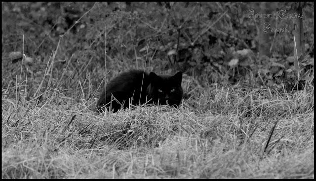 eine schwarze Katze im Gras