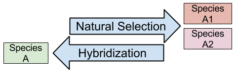 Hybridization against forces of natural selection