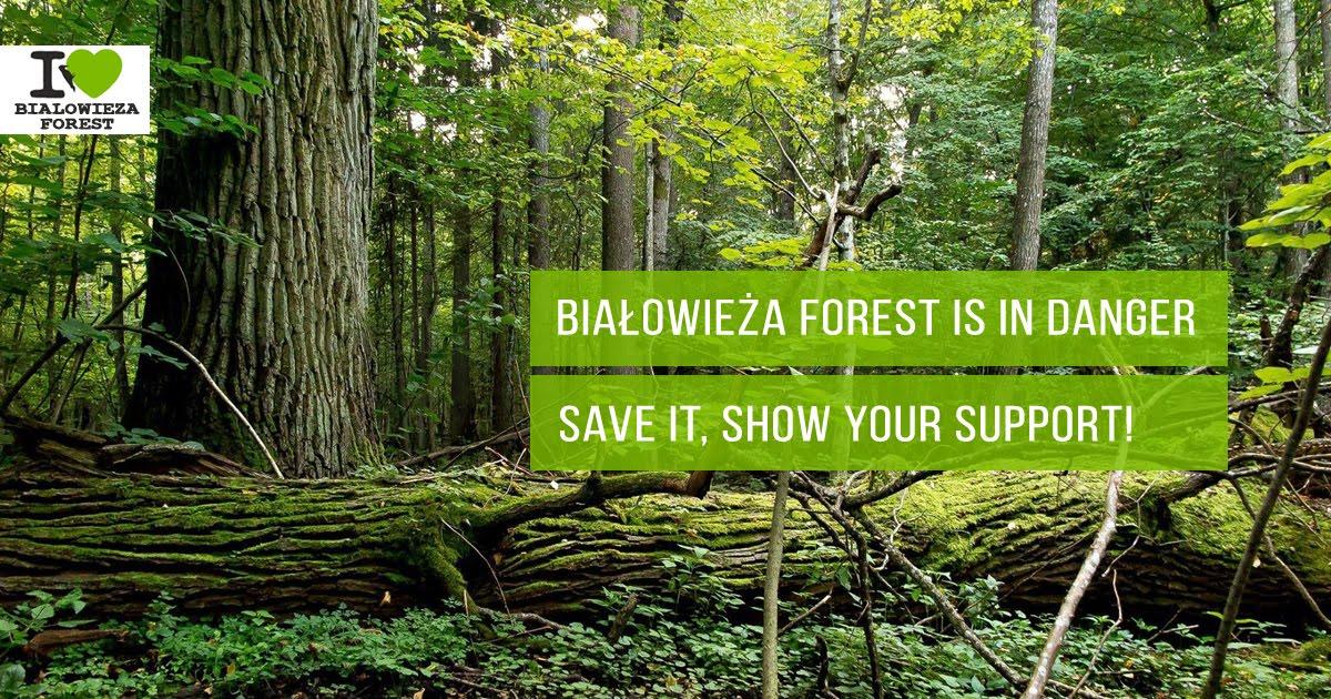 No a la destrucció del bosc de Białowieża
