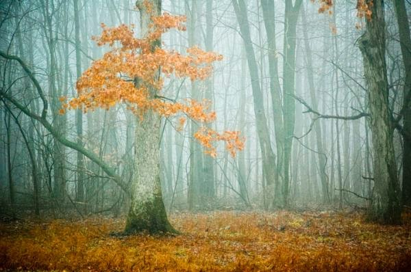 Cute Forest Photography by Joy St.Claire