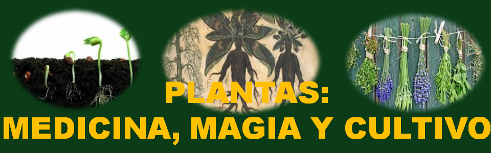 PLANTAS MÁGICAS