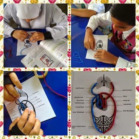 Idea P P Sains Bina Sistem Peredaran Darah