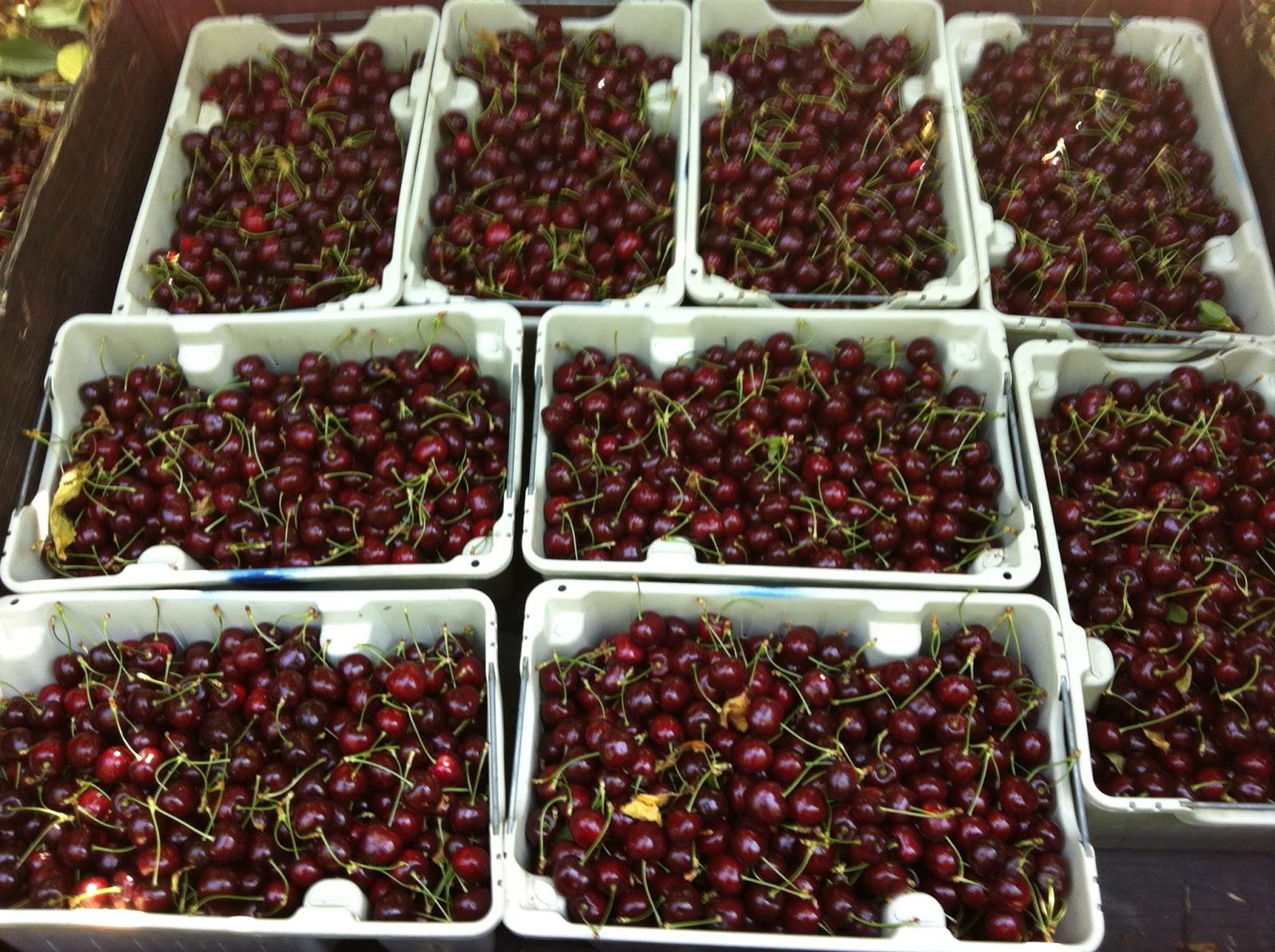 produce clerk the produce clerks handbook by rick chong fresh picked cherries in osoyoos b c