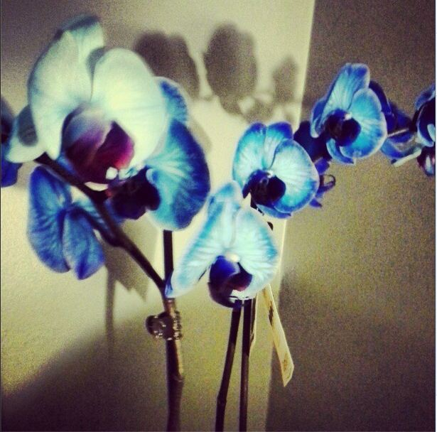 Sapphire Orchids