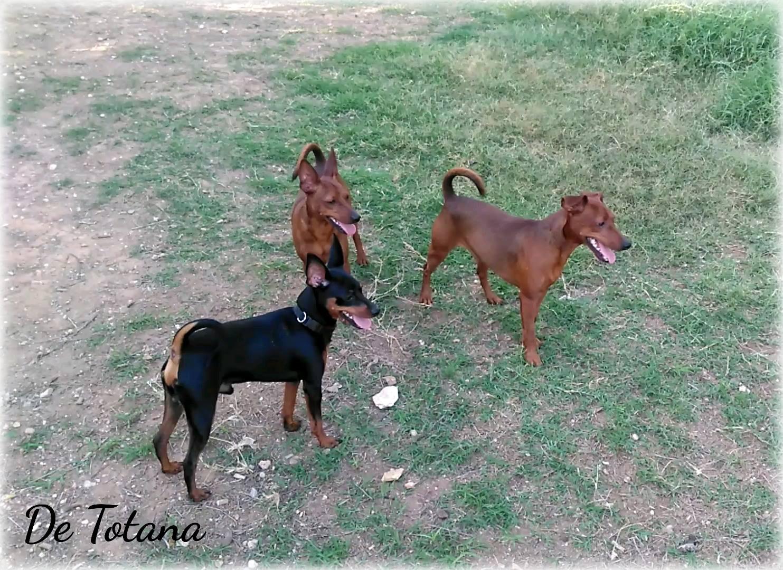 Izan, Magnus y Coque De Totana