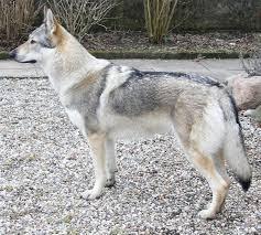 اسعار الكلاب 2019 لجميع الأنواع 55.jpeg