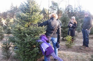 Cut you own Christmas tree